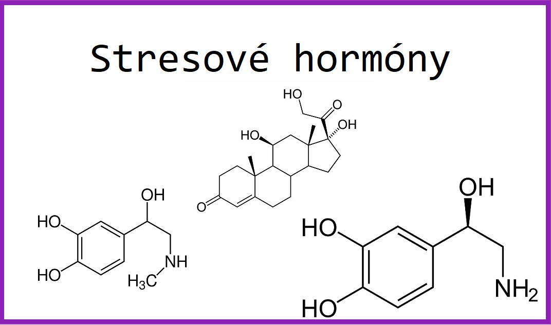 stresové hormony